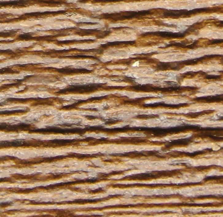 ver de bois ou termite best material collected by the ccp with ver de bois ou termite les. Black Bedroom Furniture Sets. Home Design Ideas