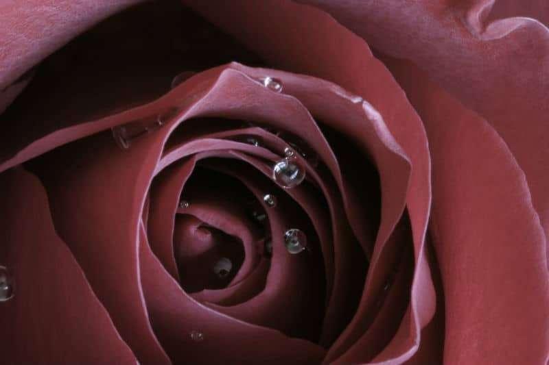 Rose Red Siding