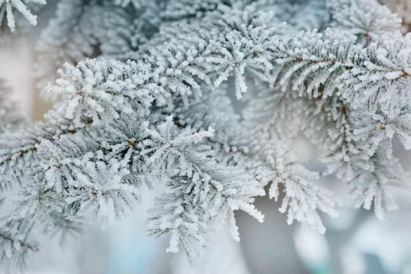 white snow on tree